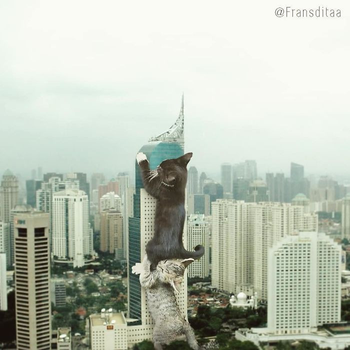 cat-giants-13