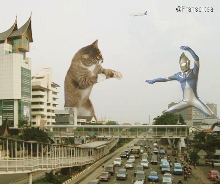cat-giants-14