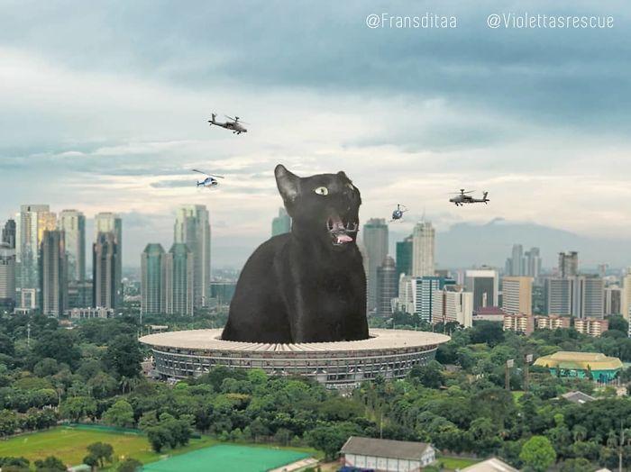 cat-giants-15