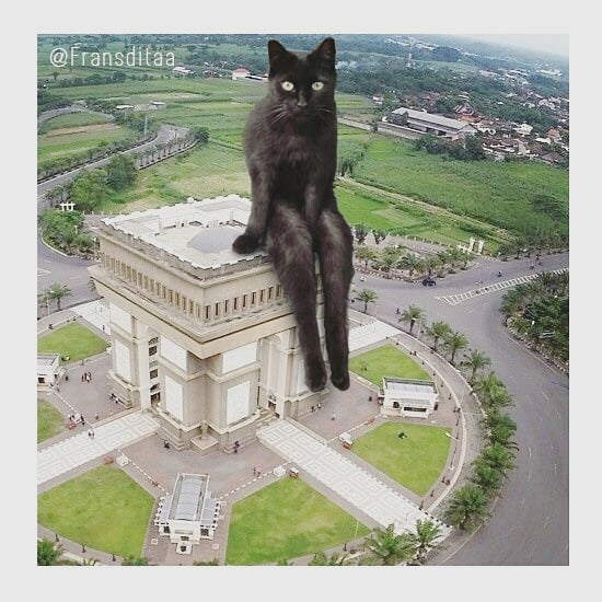 cat-giants-17