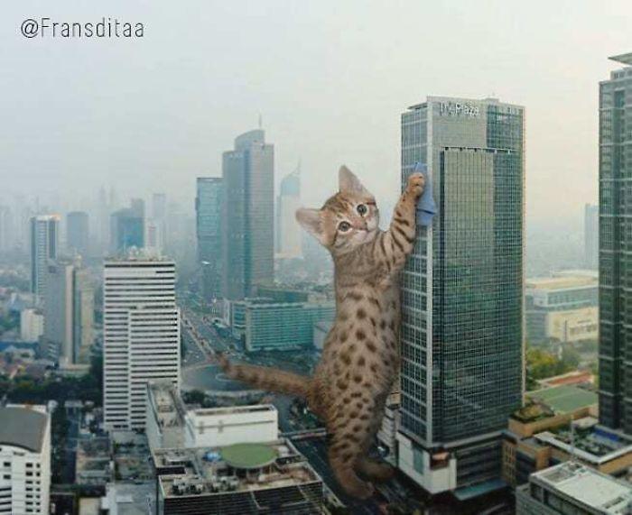 cat-giants-18