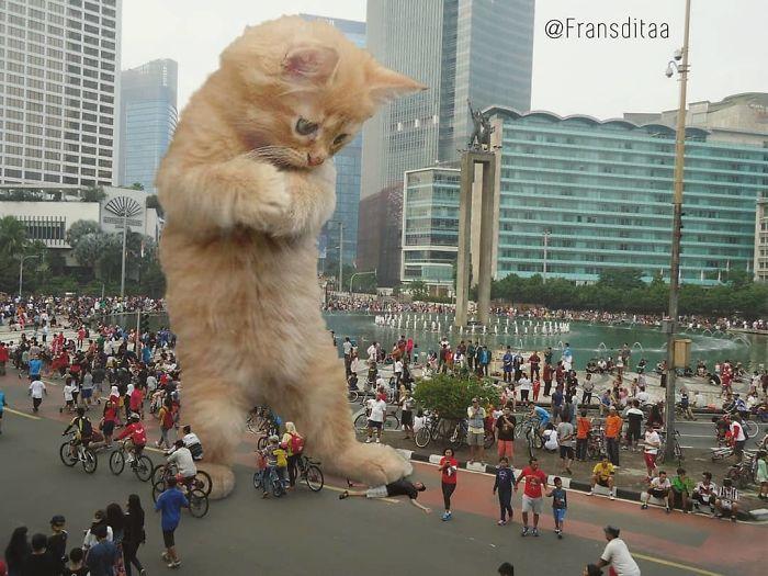 cat-giants-2