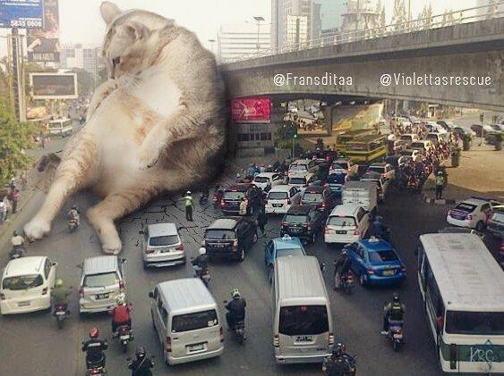 cat-giants-20