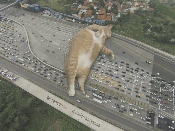 cat-giants-23