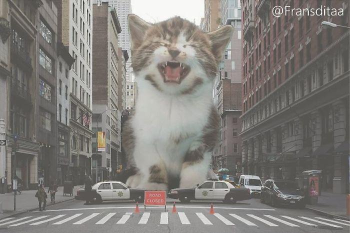cat-giants-3