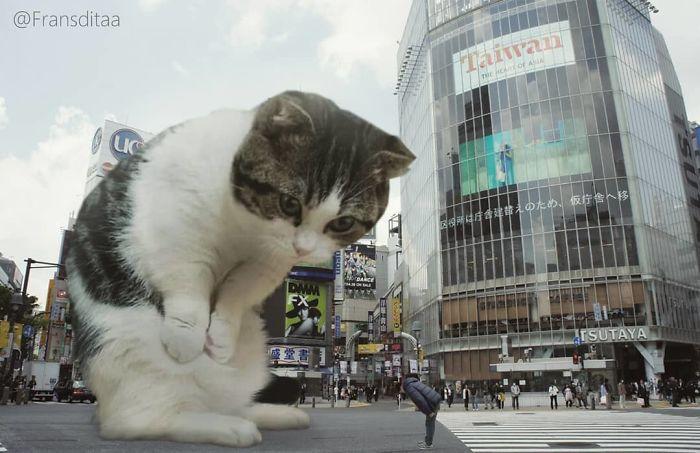 cat-giants-4