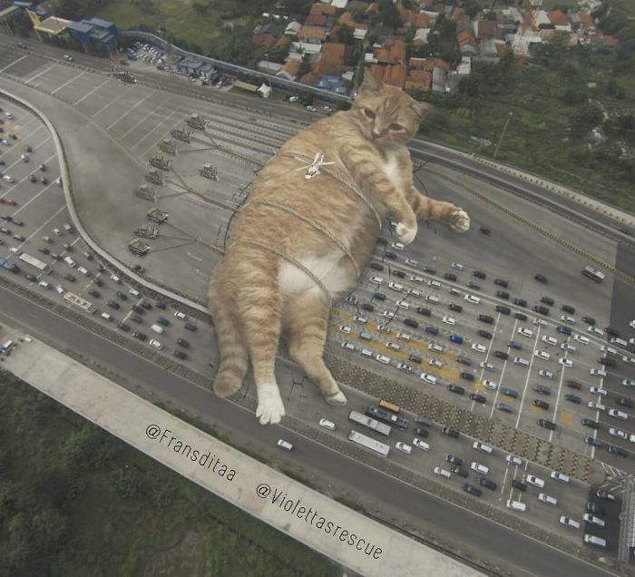cat-giants-5