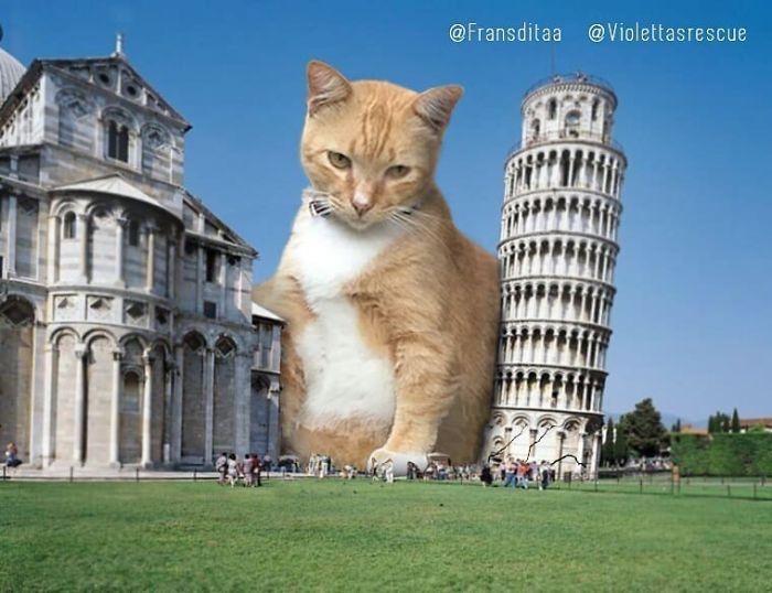cat-giants-8