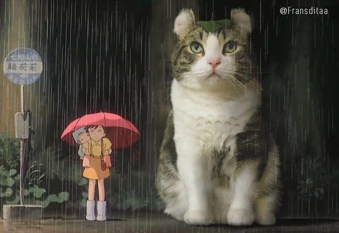 cat-giants-9